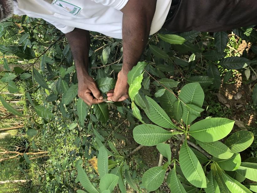 Hormonálna JOGA na Sri Lanke s ochutnávkou ayurvédy MAREC